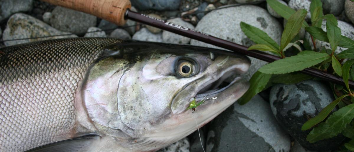 Lachsfliegen erhältlich im großen Sortiment bei Flyfishing Europe