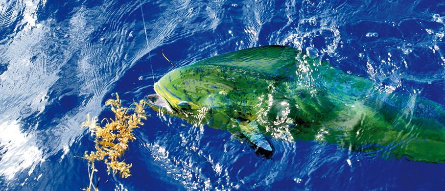 Großstreamer für Salzwasser und Süßwasser zum Fliegenfischen bei Flyfishing Europe