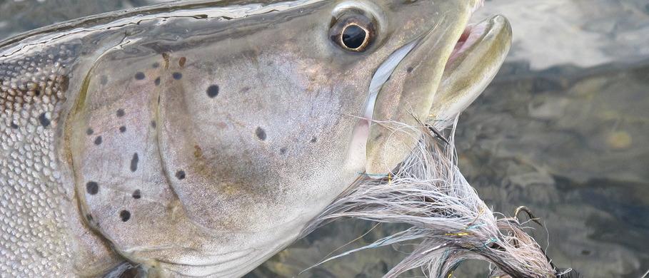 Großstreamer für Salzwasser und Süßwasser Online kaufen bei Flyfishing Europe