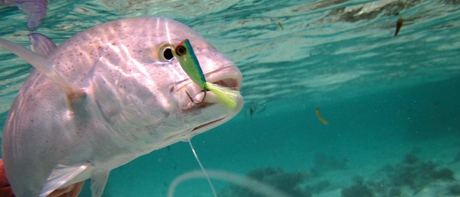 Bonefish & Permit Fliegen online erhältlich bei Flyfishing Europe