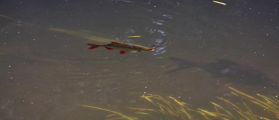 Midges & Buzzers erhältlich bei Flyfishing Europe