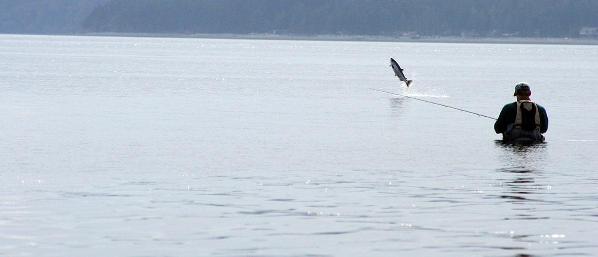 Meerforellenfliege sorgt fuer spannenden Drill