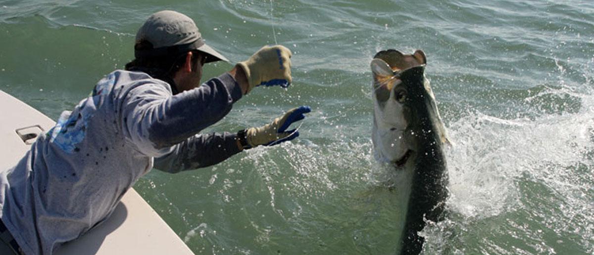 Scientific Anglers Fliegenschnüre und Schussköpfe