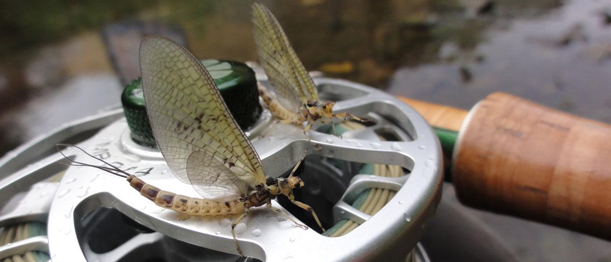 Die Nautilus MP Limited Edition Fliegenrolle von Mirjana Pavlic gefällt wohl nicht nur Fliegenfischern...