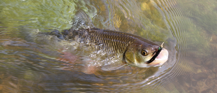 Buggers & Leeches bei Flyfishing Europe
