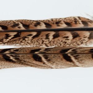 Jagdfasan Stoßfedern Henne, weiblich, Schwanzfedern Center Tail Bindematerial bei Flyfishing Europe