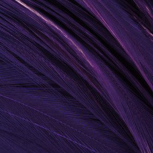 Streamer Hecheln Federn purple