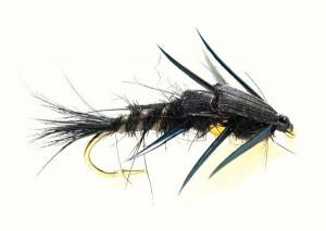 Nugget Creeper Steinfliegenlarve schwarz gold Nymphe