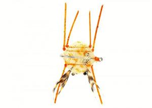 Crab Flexo sand Salzwasserfliege