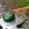 Gefällt nicht nur dem Fliegenfischer - Maifliegen auf der MP Limited Edition Fliegenrolle zum Fliegenfischen bei Flyfishing Europe