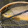 Winston Rute Nexus Fliegenruten zum Fliegenfischen bei Flyfishing Europe