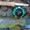 Bauer Mackenzie CFX Fliegenrollen zum Fliegenfischen bei Flyfishing Europe